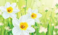 Daffodils Presentation Template