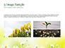 Daffodils slide 12