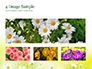 Daffodils slide 13