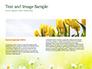 Daffodils slide 14