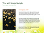 Daffodils slide 15