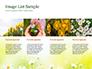 Daffodils slide 16