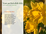 Daffodils slide 9