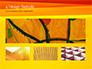 Bright Orange Background slide 13