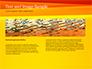 Bright Orange Background slide 14