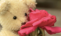 Teddy Bear with a Rose Presentation Template