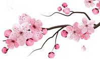Sakura Presentation Template