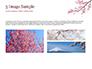Sakura slide 12