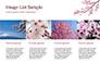 Sakura slide 16