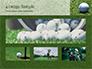 Golf Ball on Grass slide 13
