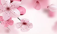 Delicate Sakura Flowers Presentation Template