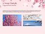 Delicate Sakura Flowers slide 12