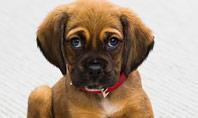 Cute Puppy Presentation Template