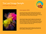 Holi Festival Accessories slide 15