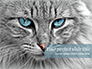 Cat with Blue Eyes slide 1