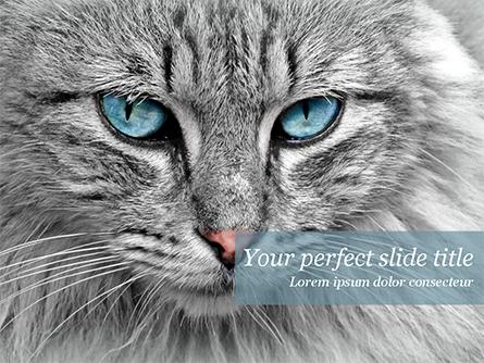 Cat with Blue Eyes Presentation Template, Master Slide