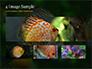 Discus Fish slide 13