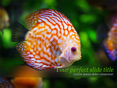 Discus Fish Presentation Template, Master Slide
