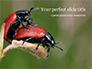 Two Ladybugs slide 1