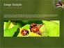 Two Ladybugs slide 10