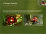 Two Ladybugs slide 11