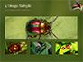 Two Ladybugs slide 13