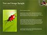 Two Ladybugs slide 15