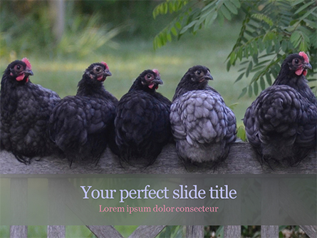 Several Hens are Sitting on Fence Presentation Template, Master Slide