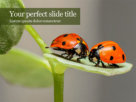 Insects Communication Presentation Template, Master Slide