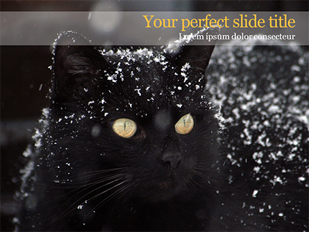 Beautiful Black Cat Presentation Template, Master Slide