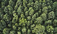 Tropical Rainforest Canopy From Above Presentation Template
