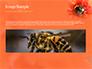 Bumblebee on Flower slide 10