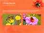 Bumblebee on Flower slide 11