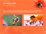 Bumblebee on Flower slide 12