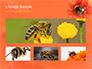 Bumblebee on Flower slide 13