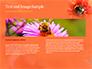 Bumblebee on Flower slide 14