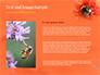 Bumblebee on Flower slide 15