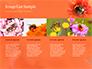 Bumblebee on Flower slide 16