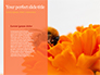 Bumblebee on Flower slide 9