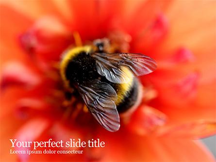 Bumblebee on Flower Presentation Template, Master Slide