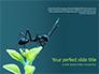 Black Ant slide 1