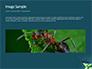 Black Ant slide 10