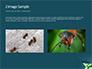 Black Ant slide 11