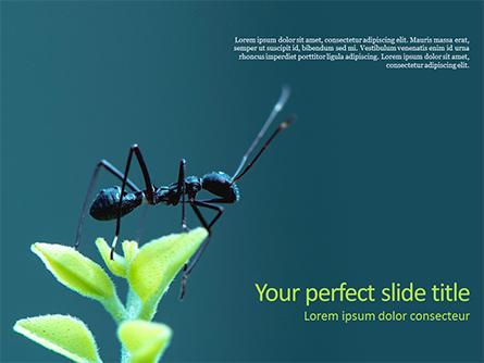 Black Ant Presentation Template, Master Slide