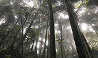 Tropical Rainforest Presentation Template