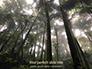 Tropical Rainforest slide 1