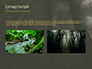 Tropical Rainforest slide 11