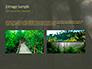 Tropical Rainforest slide 12