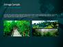 Rainforest Sunrise slide 12