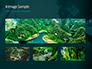 Rainforest Sunrise slide 13